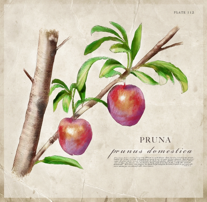BOTANICAL_PLUM_PAGE
