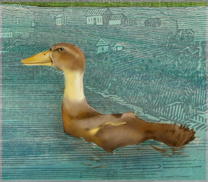 DUCK_IN_POOL_DETAIL